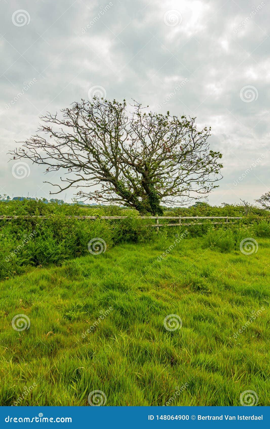 Una vista di un albero del fiore lungo un recinto di legno con erba e vegetazione verde sotto un cielo nuvoloso bianco
