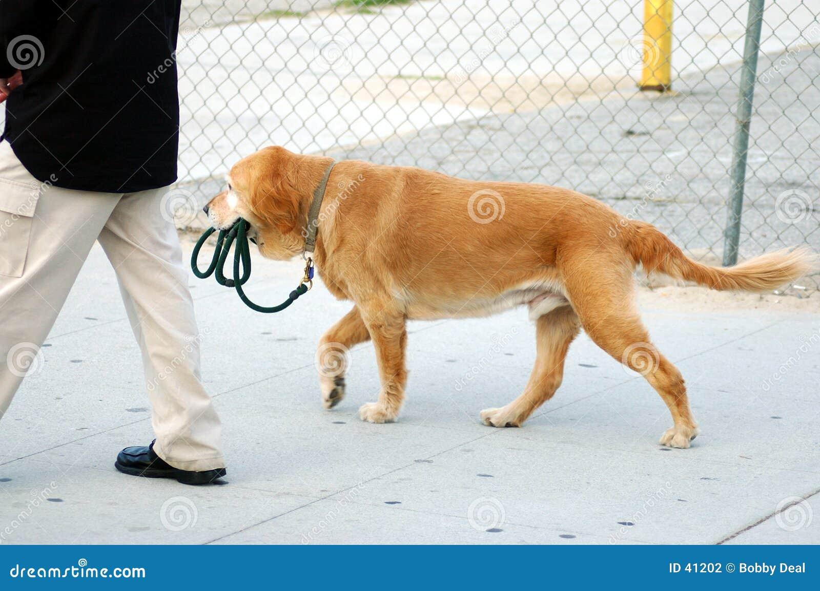 Unabhängiger Hund