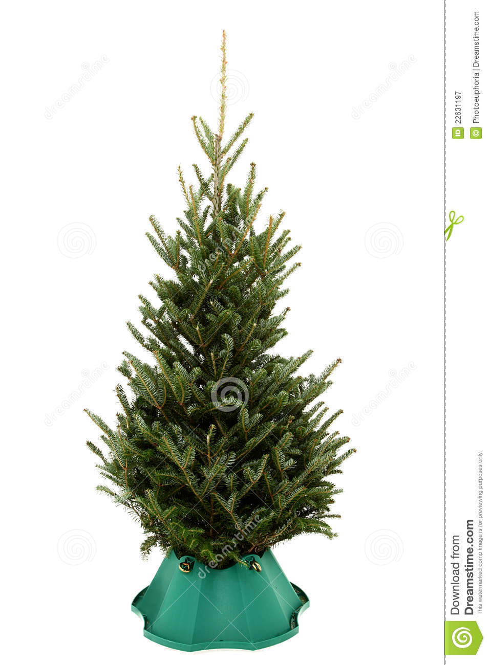 Undecorated Christmas Tree In Green Plastic Stand Royalty