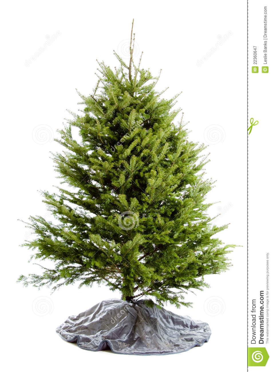 Undecorated Real Christmas Tree Royalty Free Stock ...