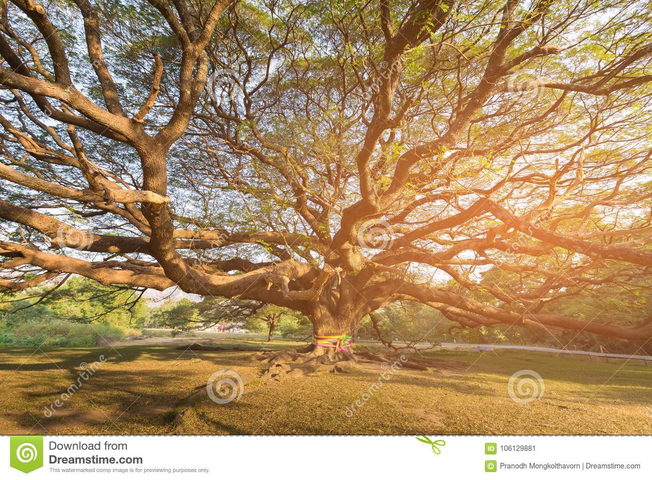 Under giant tree with sun light effect
