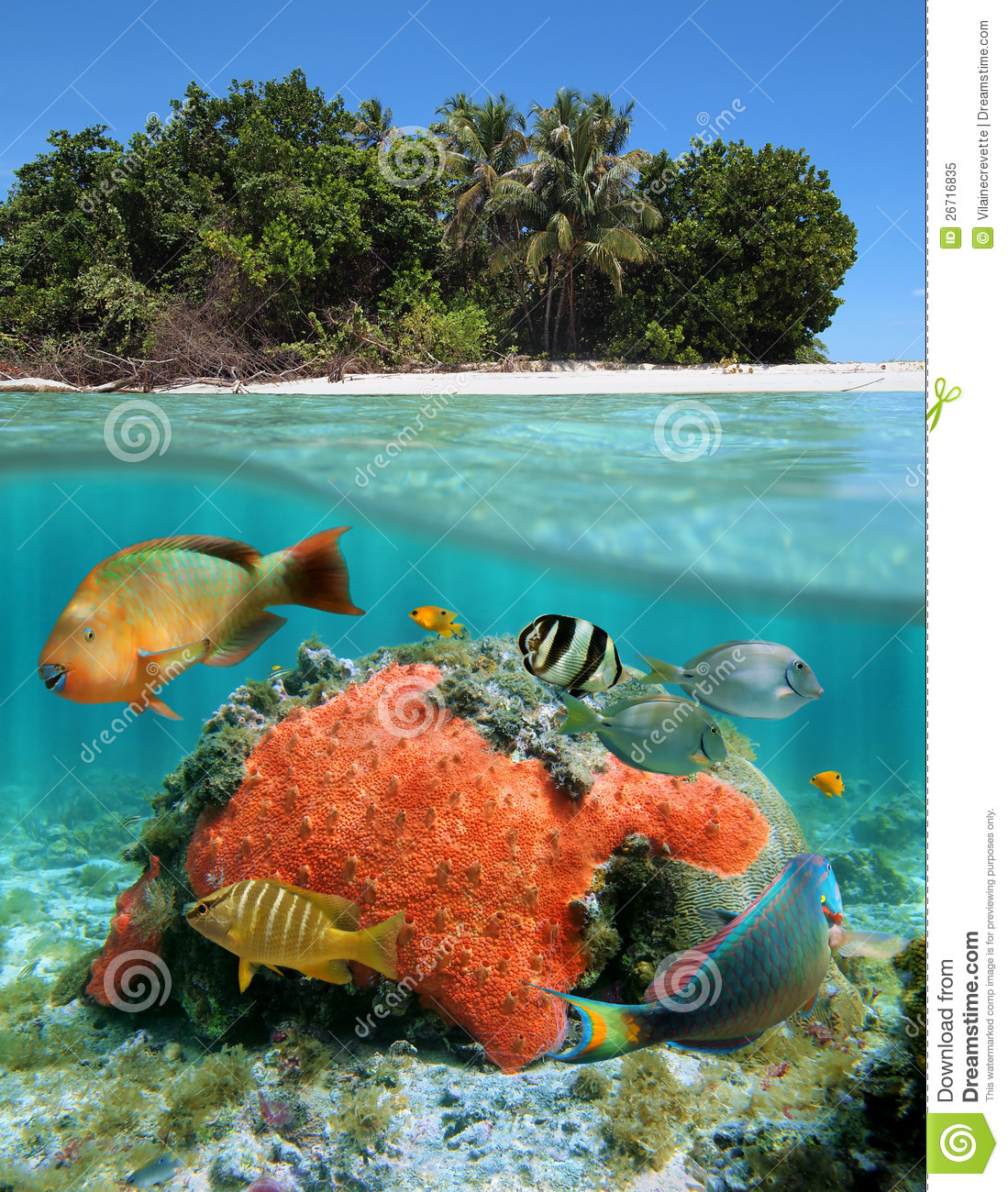 Under The Sea Amp Above The Land Royalty Free Stock Photo