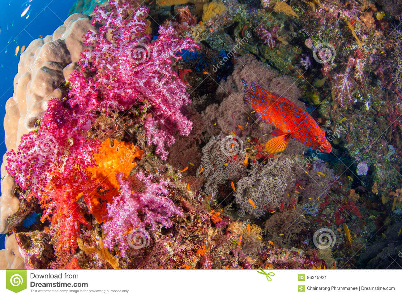 Under The Sea Colorful Fish Coral Reefs. Stock Image - Image of ...