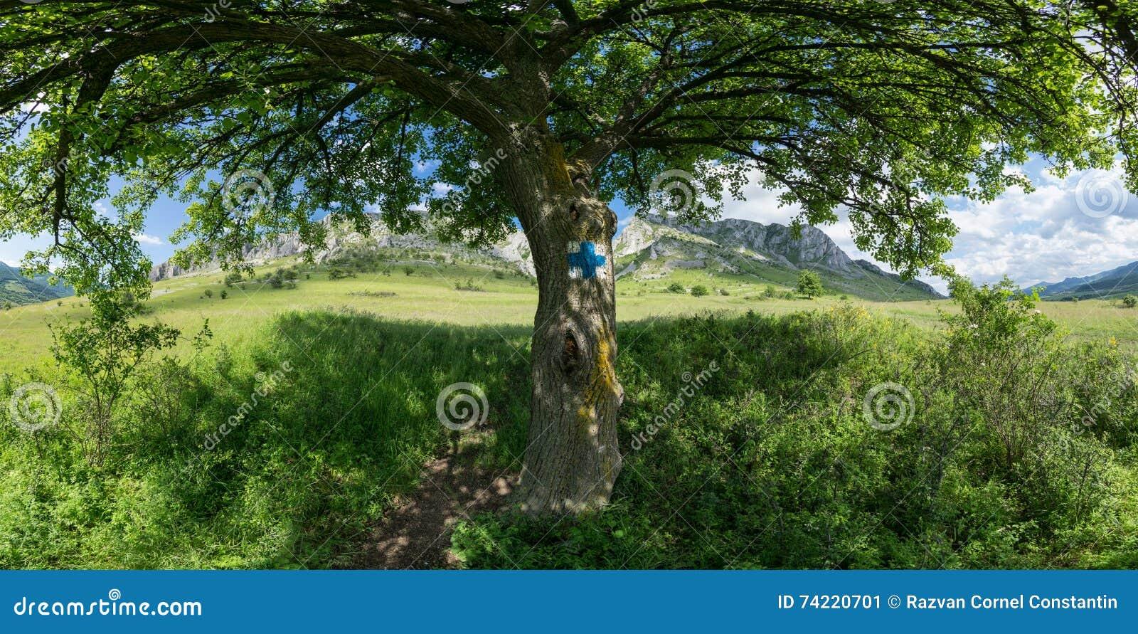 Under the tree shade