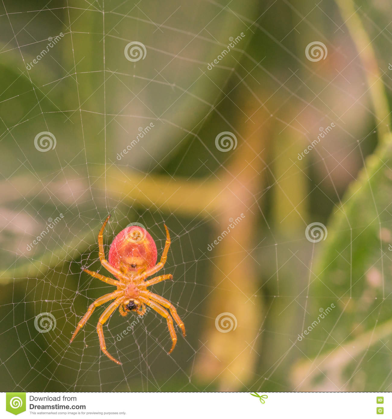 Under View of a Spider