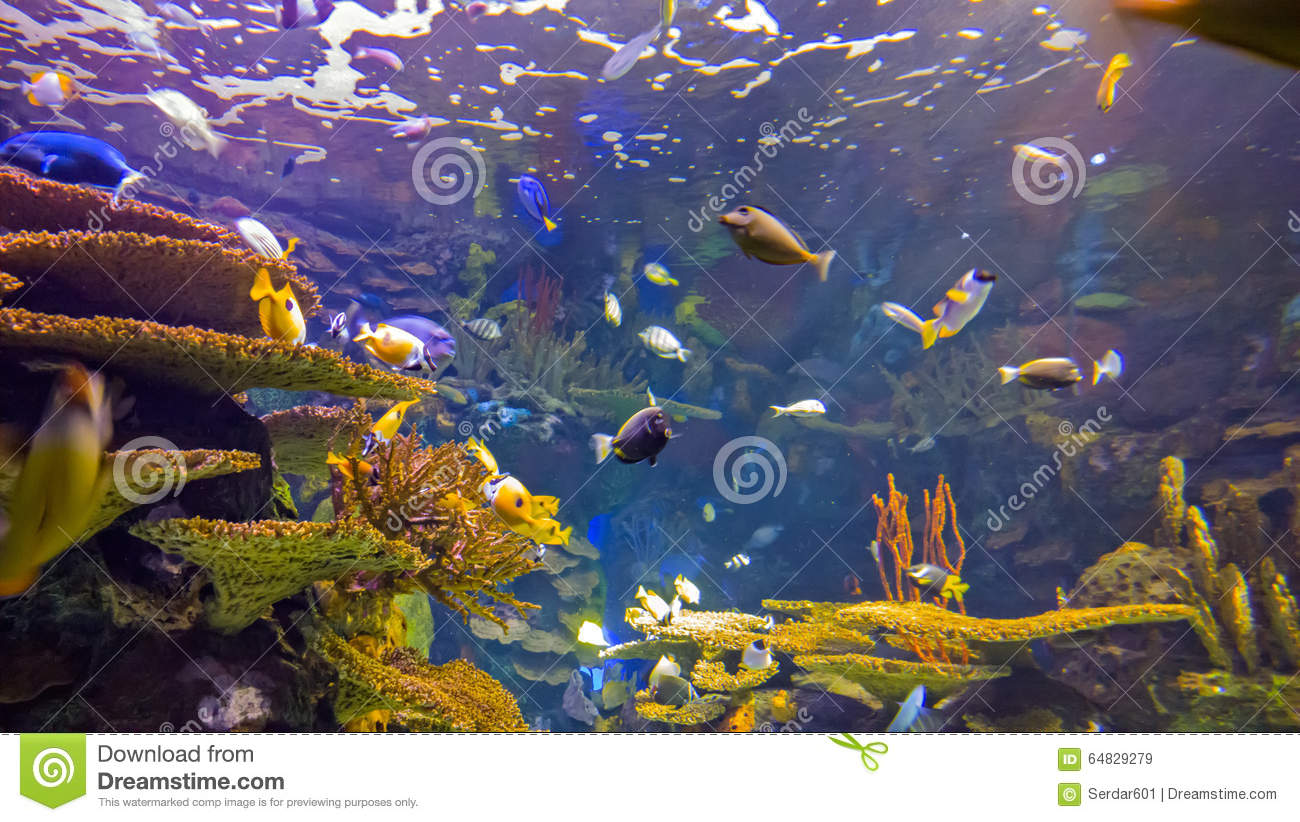 if we live under water Three species found possibly living where they should not  to find out whether  the animals could actually live in the basin — and to be sure.
