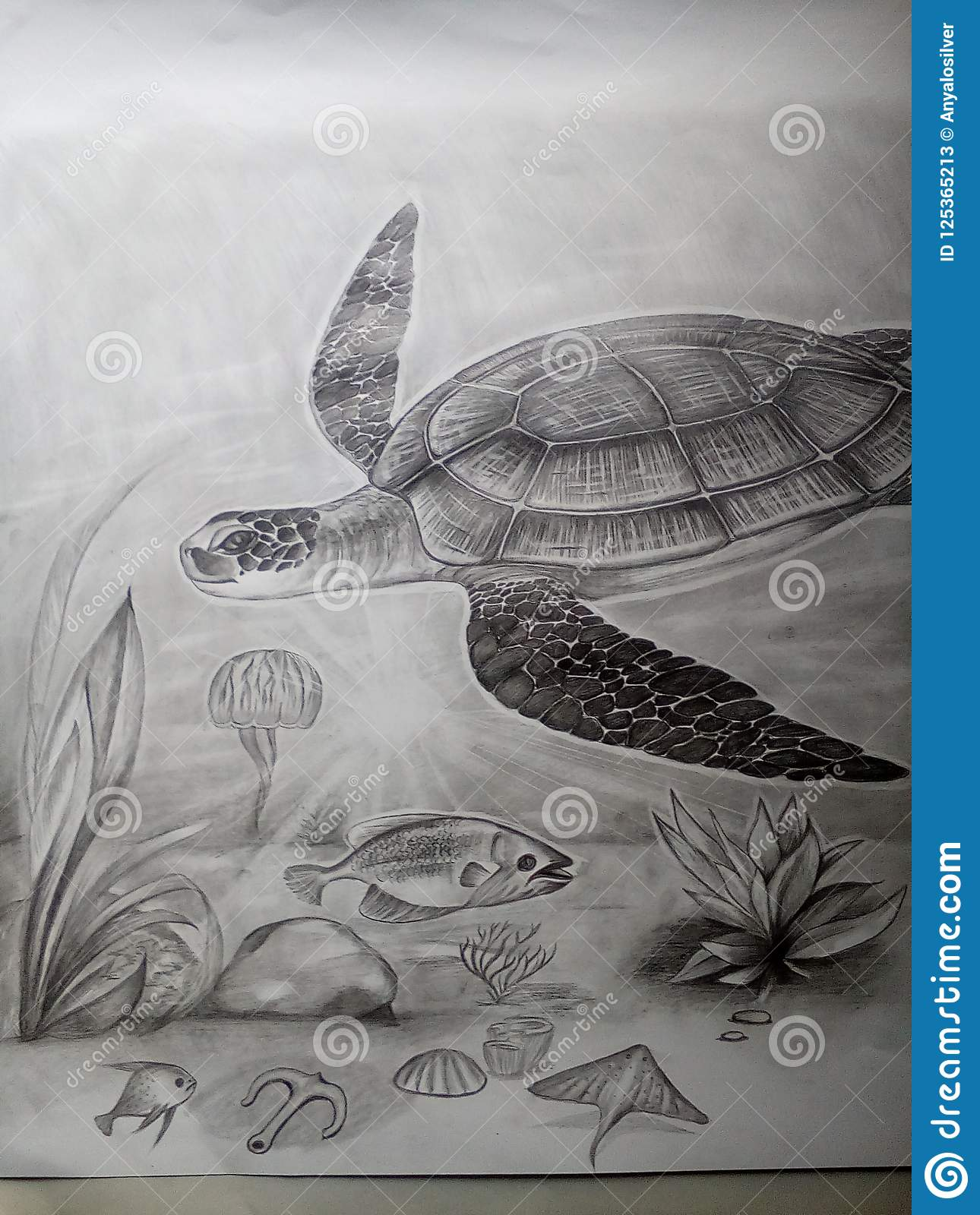 Under water pencil art turtle drawing editorial stock photo image