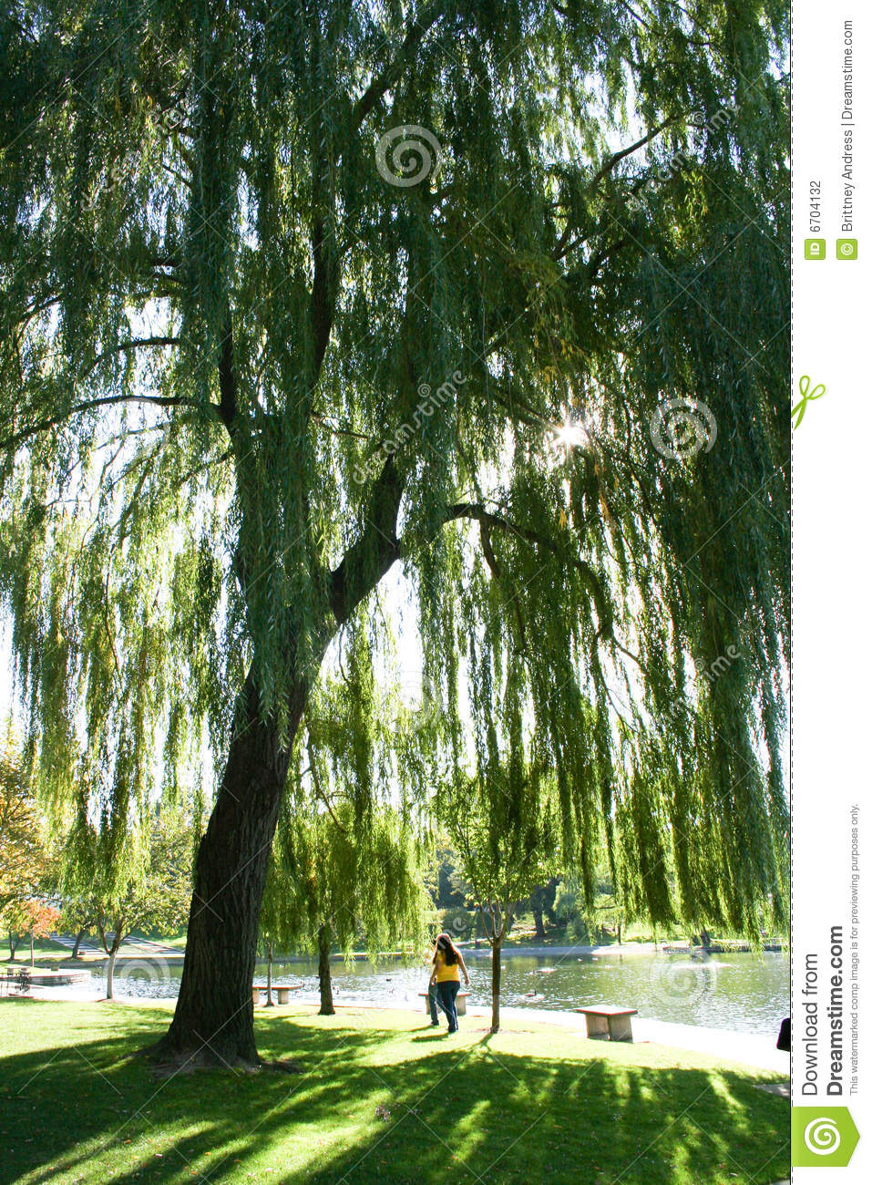 Under a Willow Tree