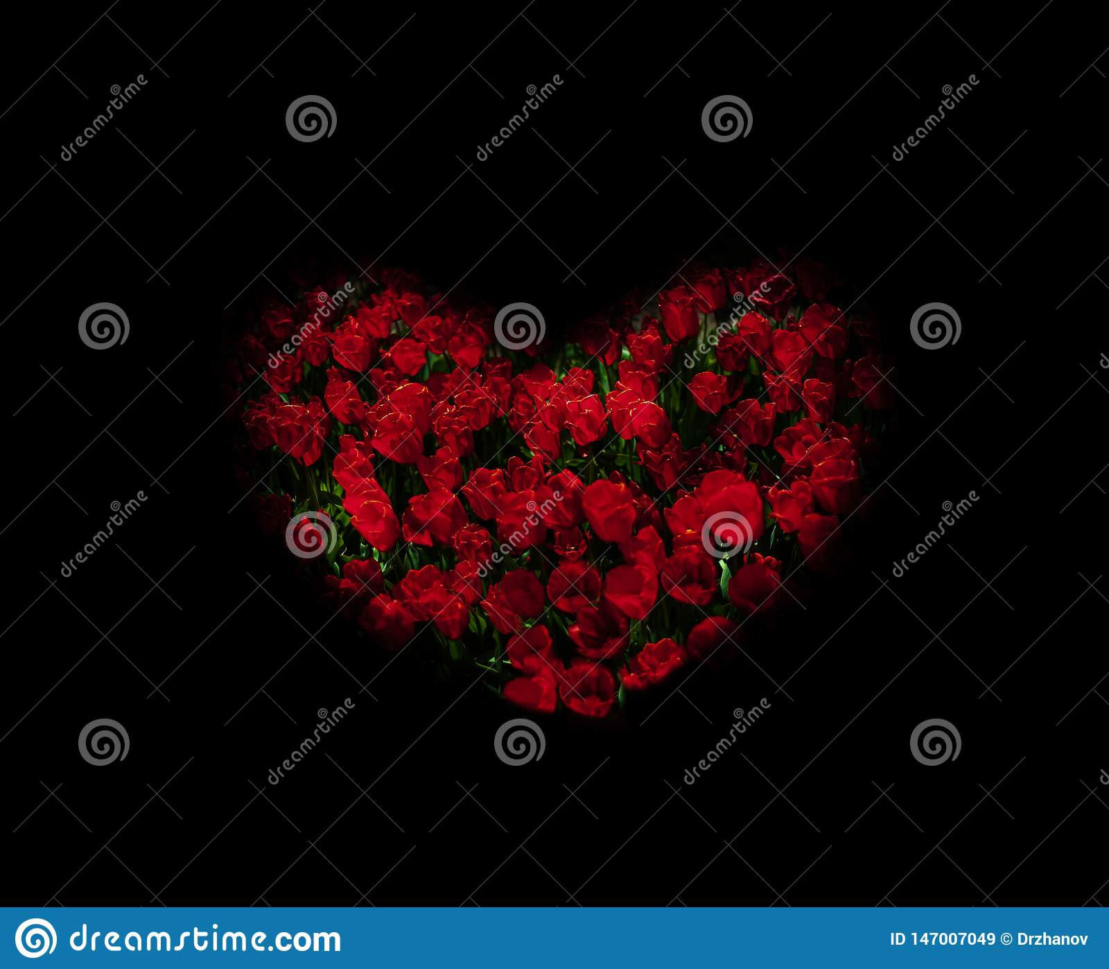 Underexposed red tulips stylized heart shape