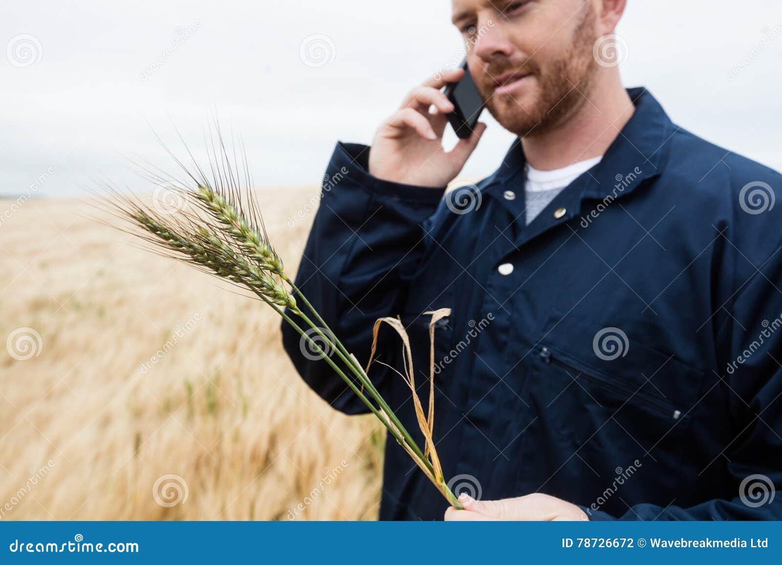 Undersökande skördar för bonde, medan tala på mobiltelefonen i fältet