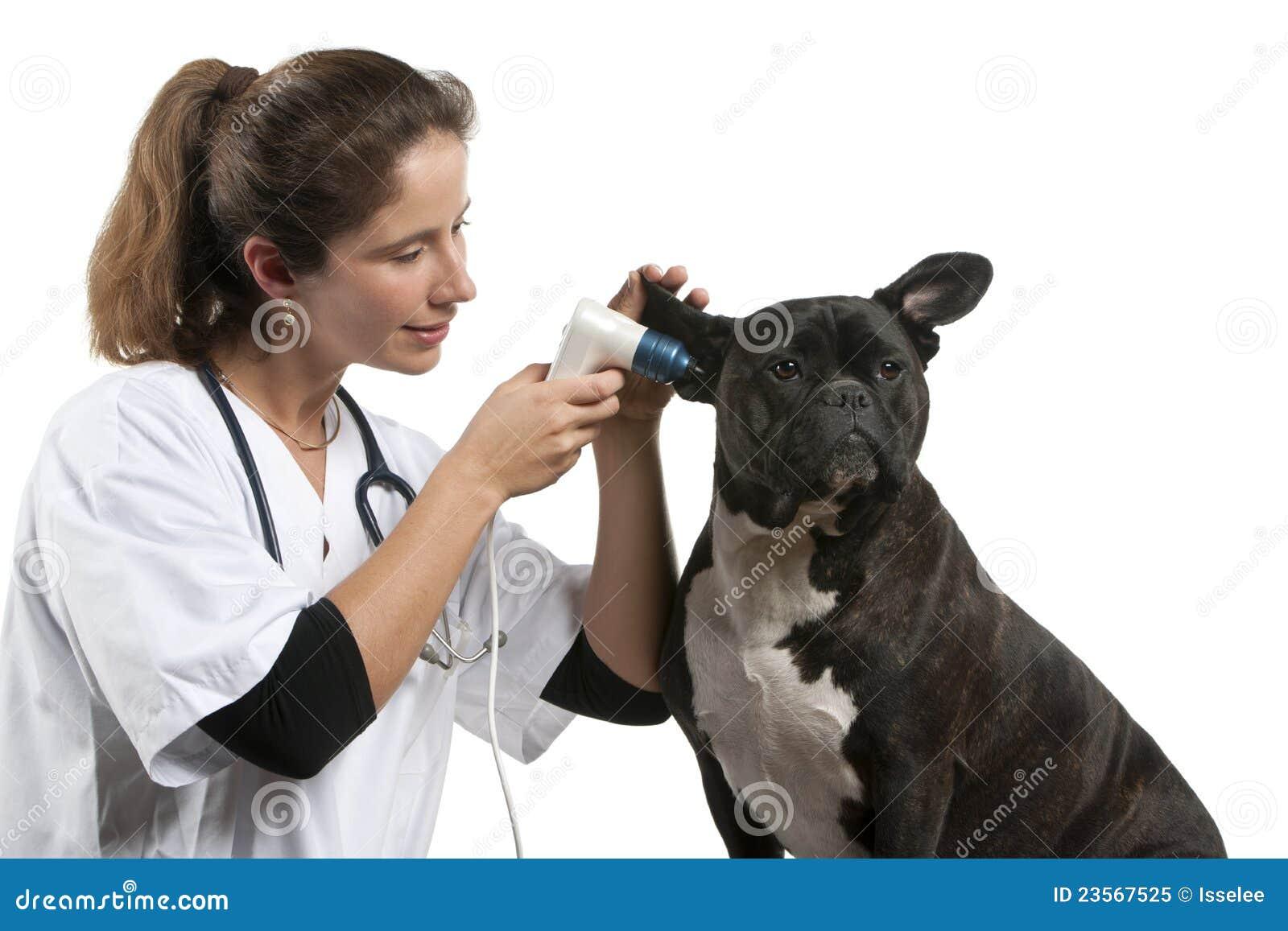 Undersökande vet för korsninghund