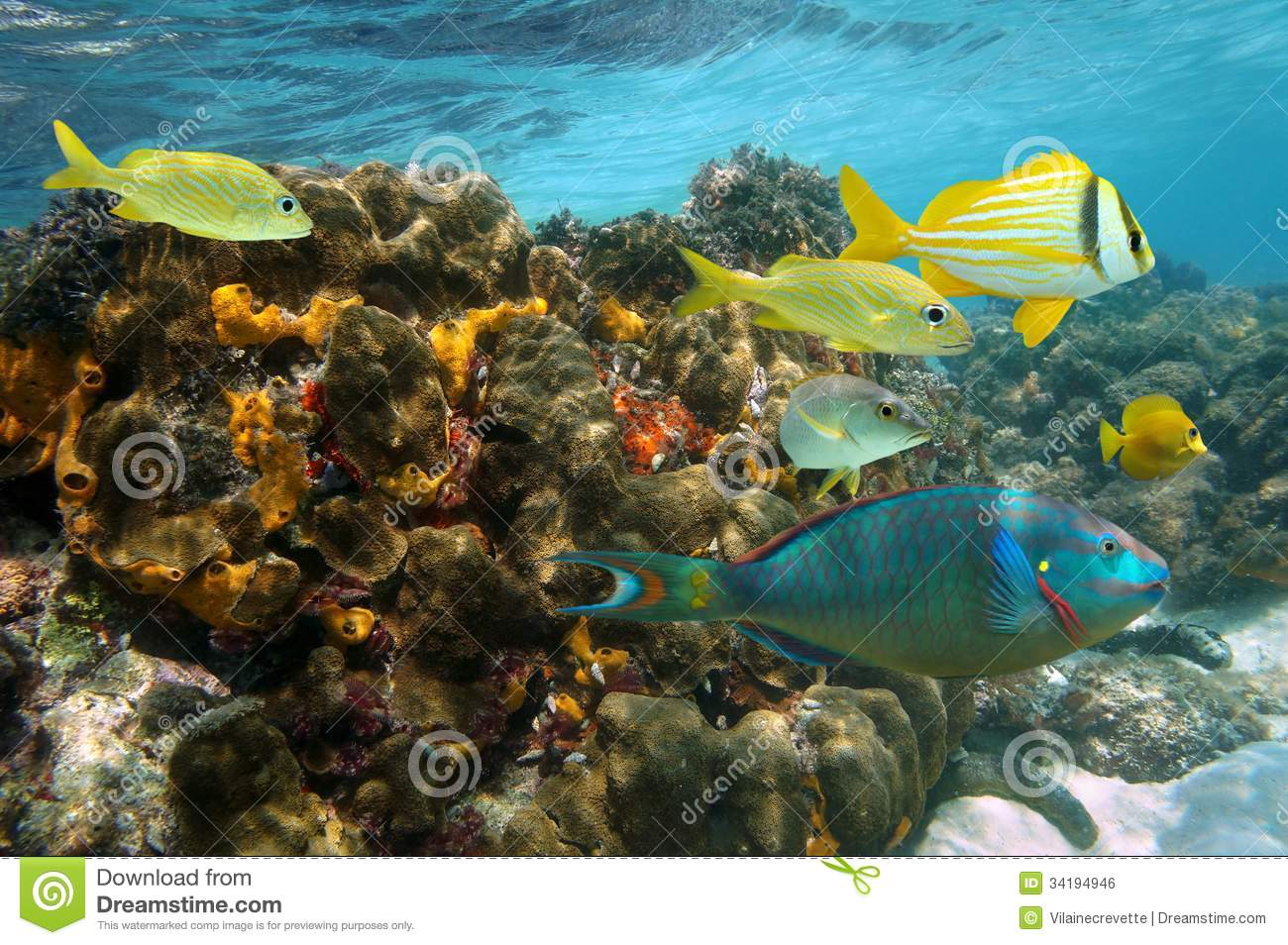 beautiful colorful coral reefs and fish