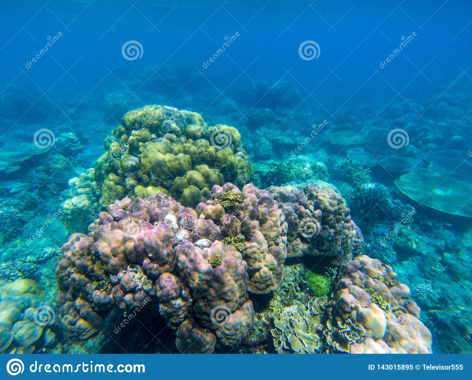 Undersea landscape with colorful coral reef. Tropical sea shore animal underwater photo. Seabottom perspective landscape