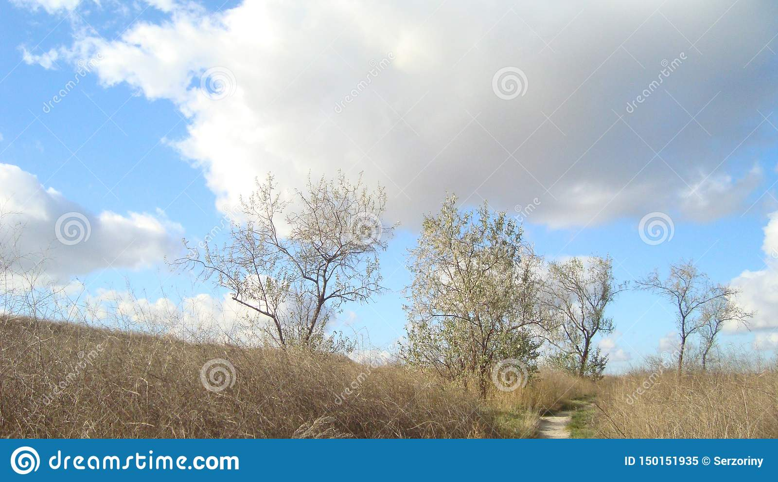 Undersized trees on an overgrown field under clouds of blue sky on a clear day