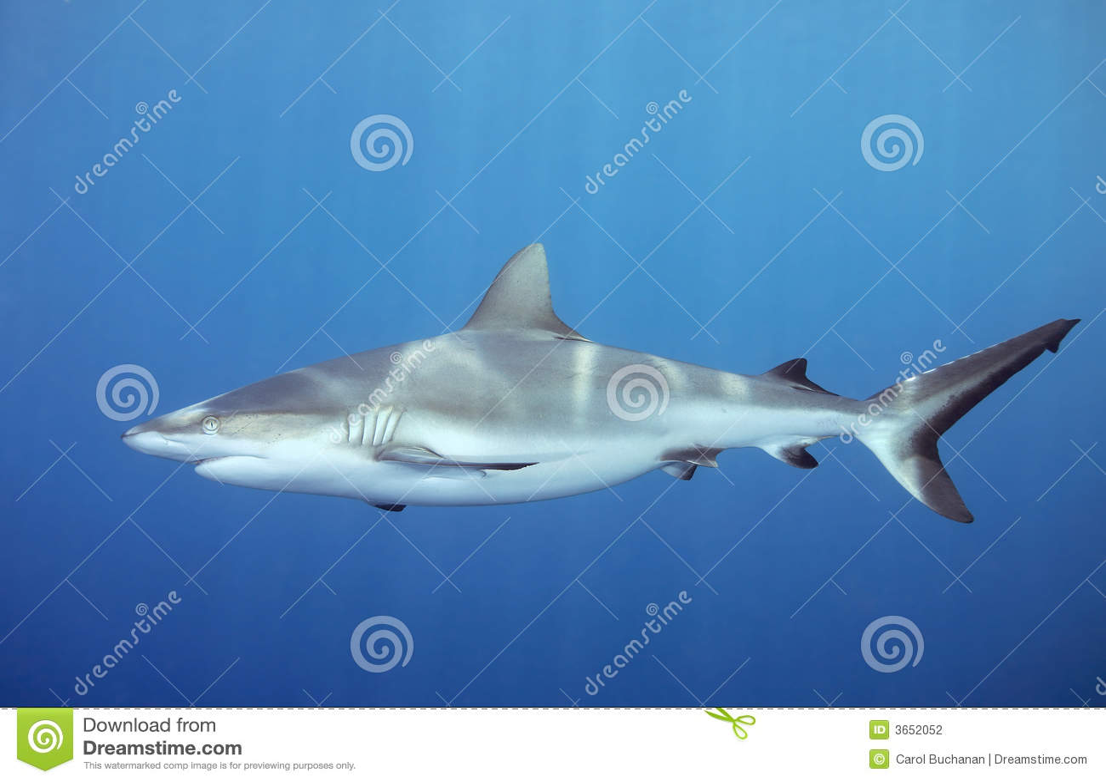 Undervattens- hajsimning