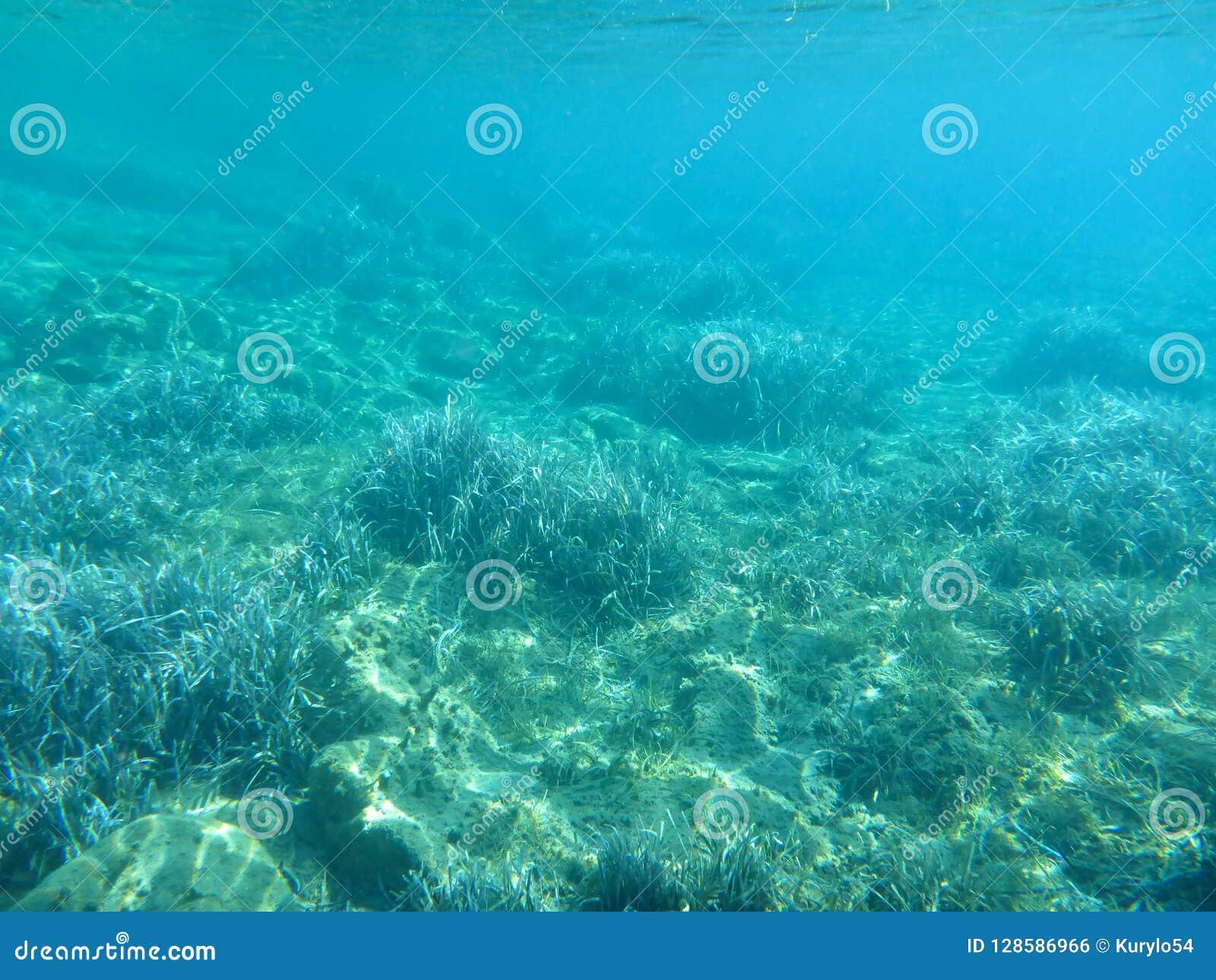 Undervattens- liv - vattenväxter i den Kythnos för Kolona dubblettfjärd ön Cyclades Grekland, Aegean hav