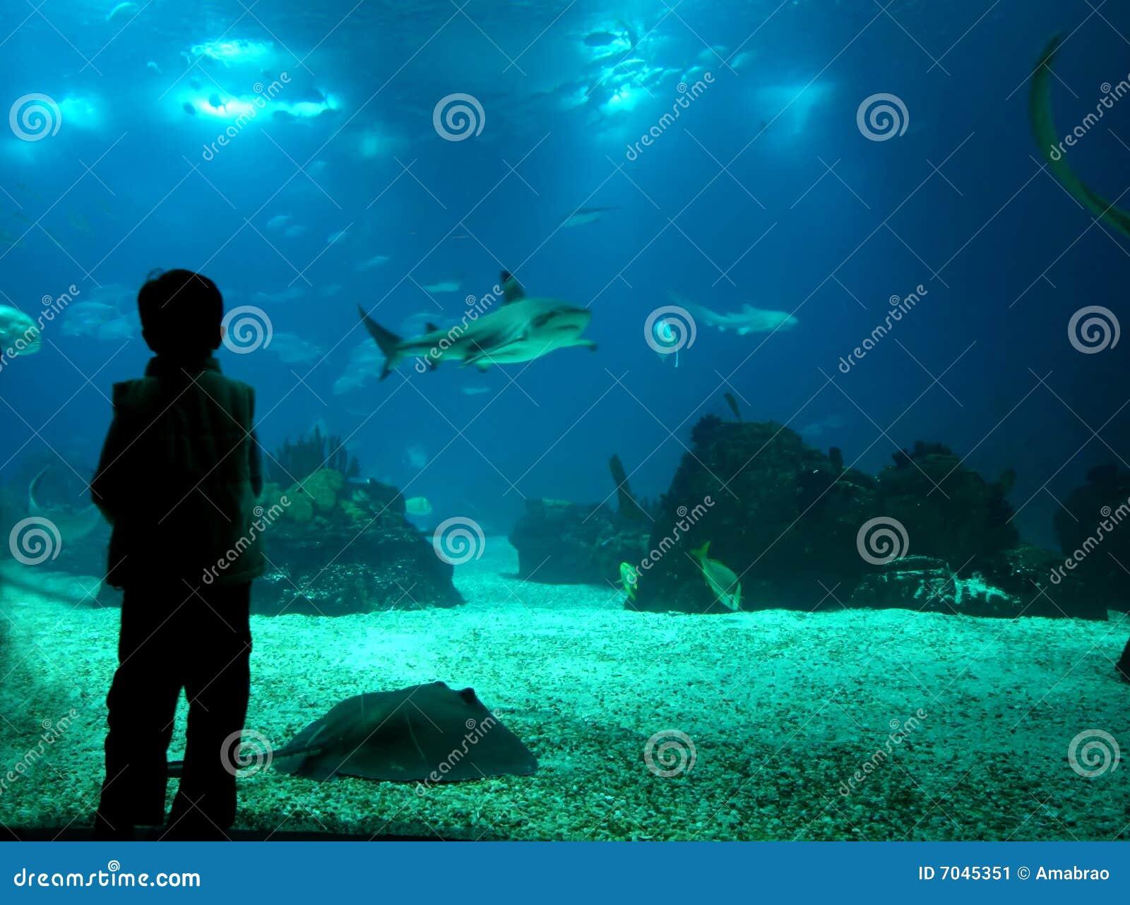 Undervattens- livstid