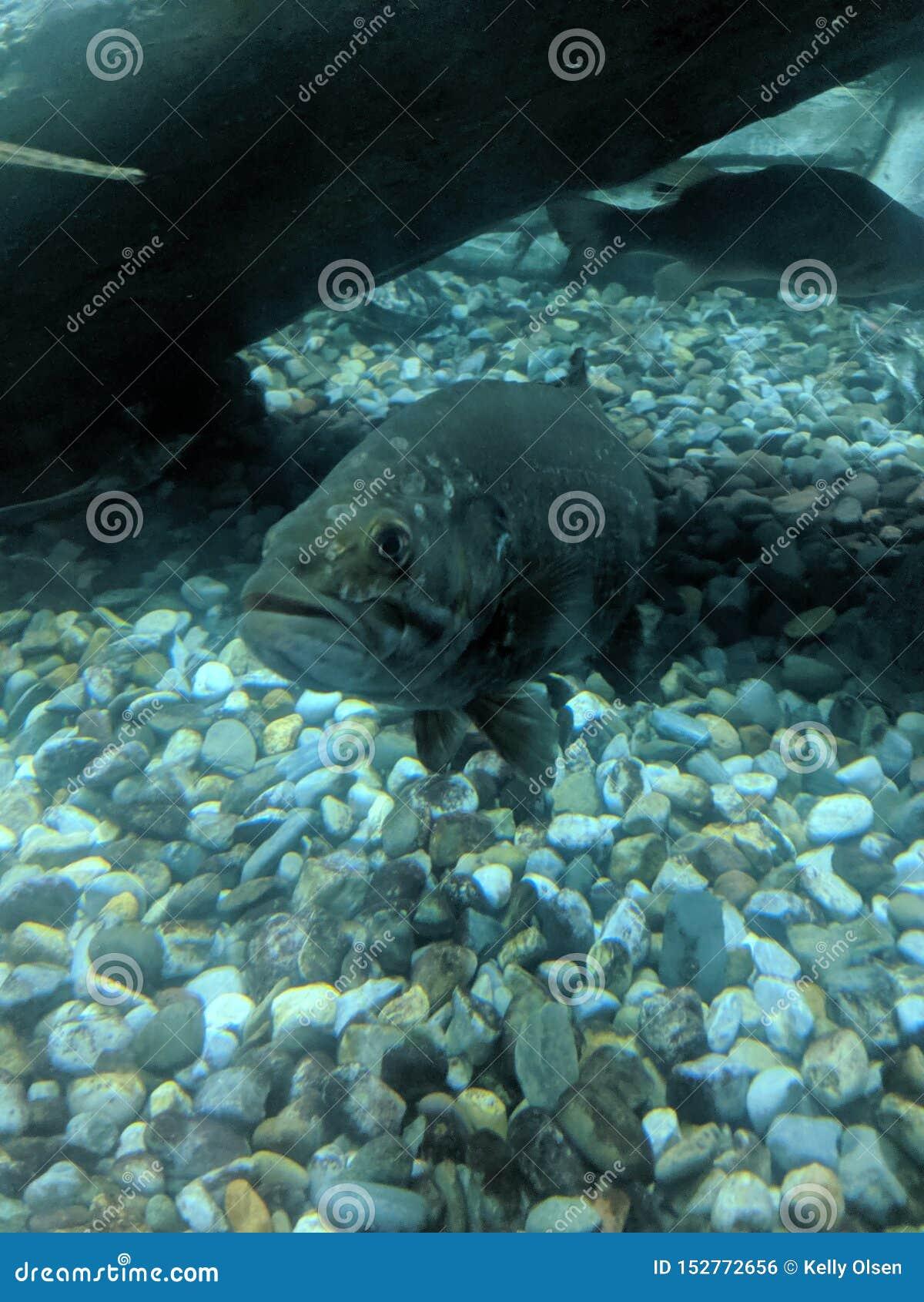 Undervattens- sikt av fisken