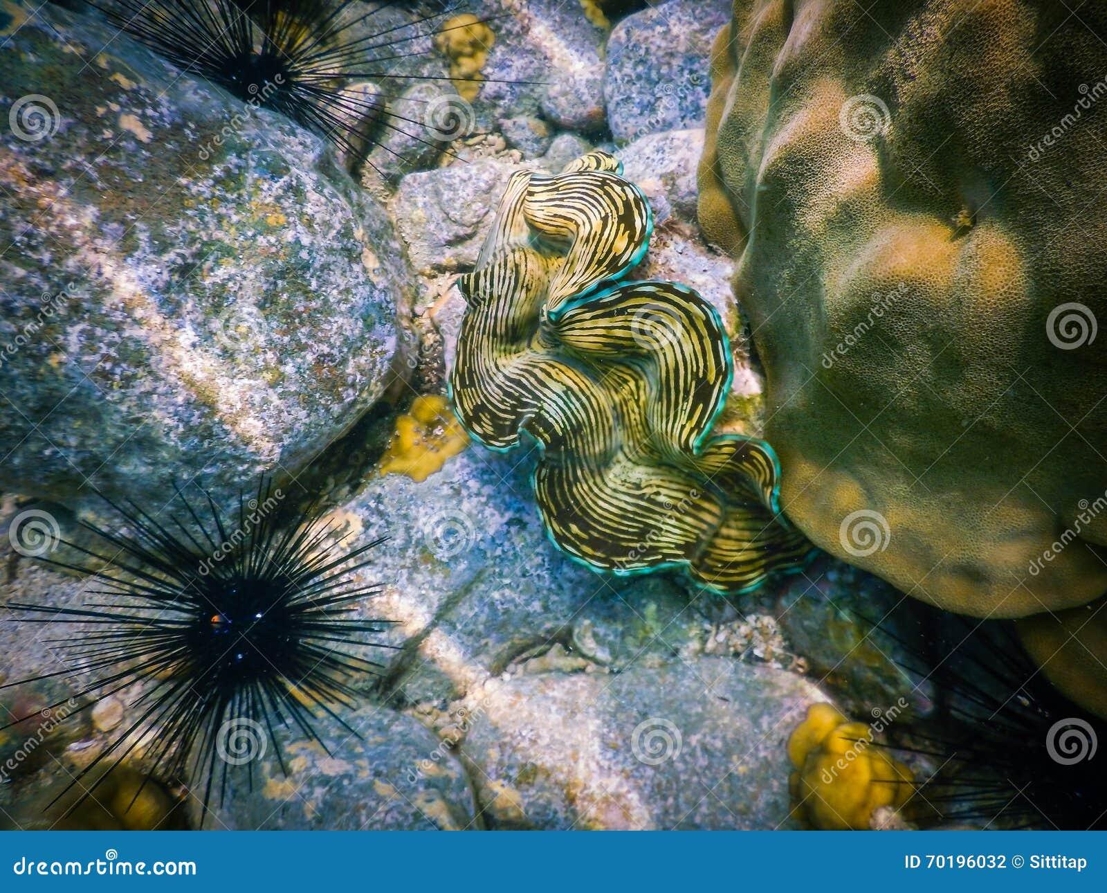 Undervattens- snorkla för havsskalRöda havet