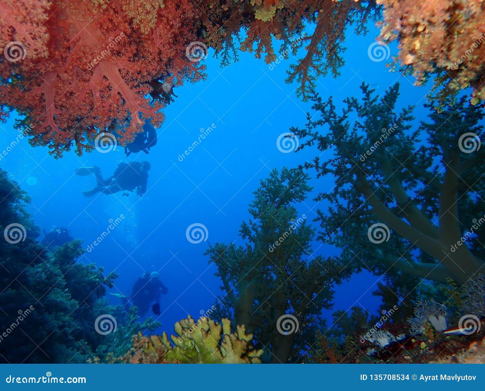 Undervattens- värld i djupt vatten i korallrev och växtblommaflora i marin- djurliv för blå värld, fisk, koraller och havsvarelse