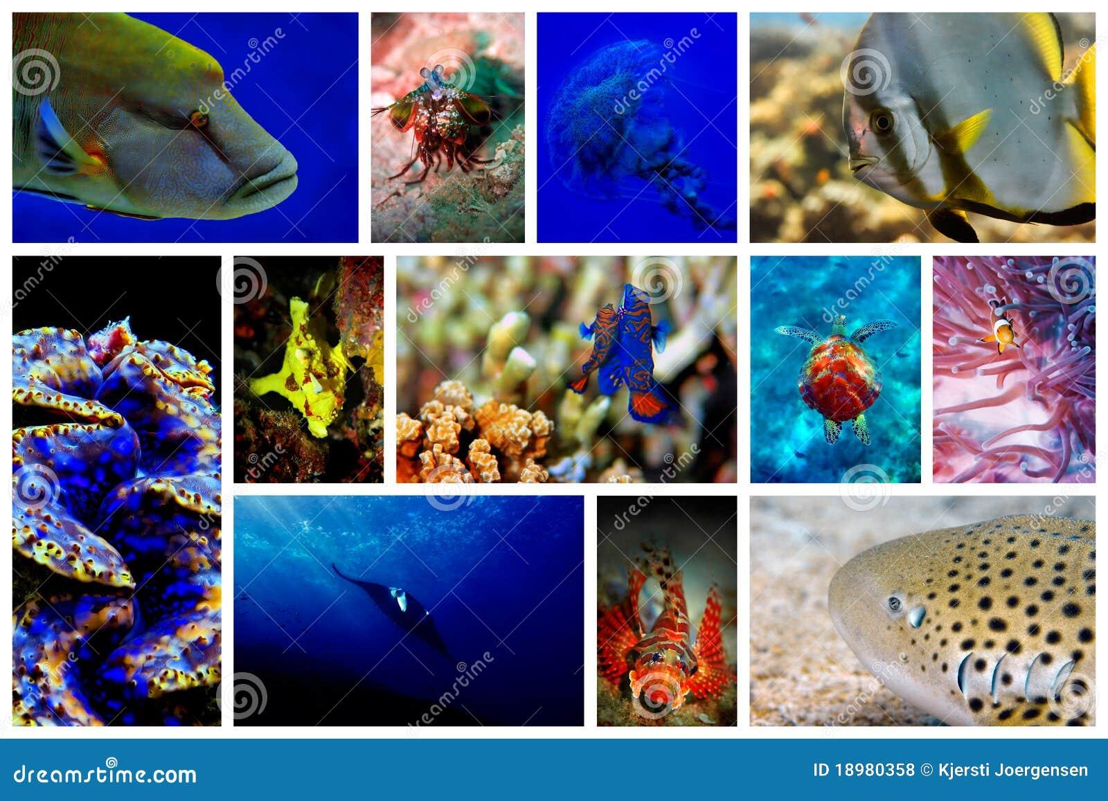 Download Underwater stock photo. Image of mantis, anglerfish, clownfish - 18980358