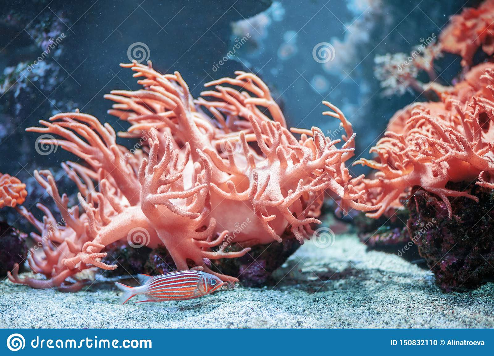 Underwater backround with Living Coral colour. Fish with corals