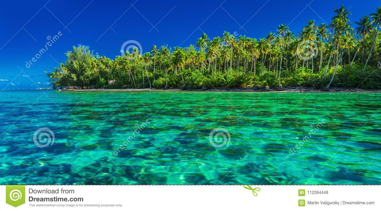 Underwater Coral Reef Next To Green Tropical Island Moorea