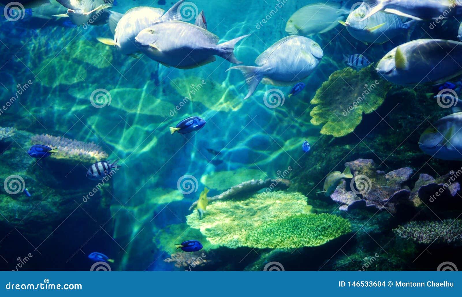 Underwater coral reef sea view
