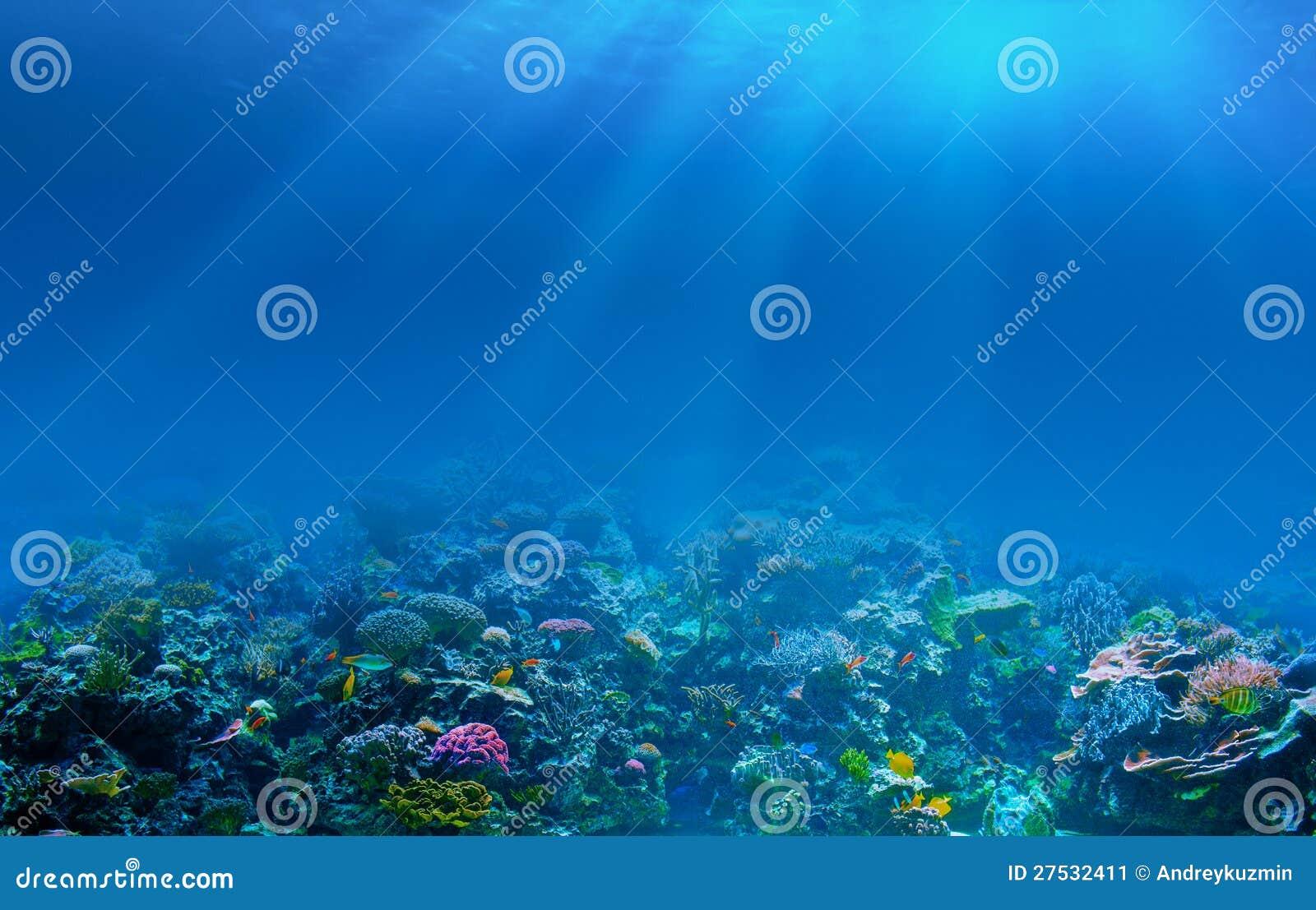 Underwater coral reef seabed background