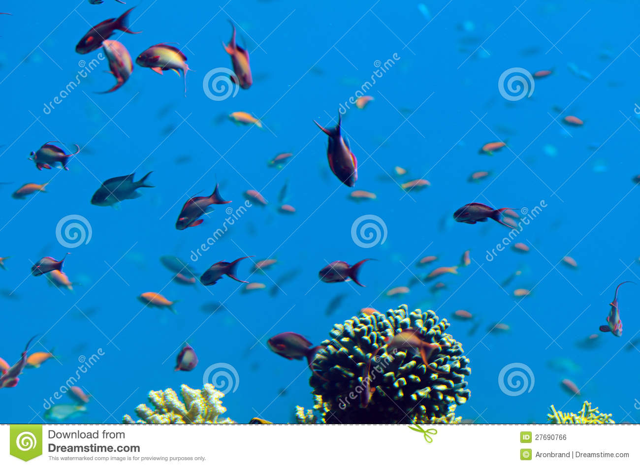 Underwater corals and red sea fish stock photo image for Red sea fish