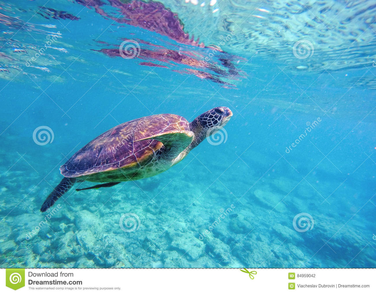 Underwater Image Of Sea Turtle For Banner Template With Text Place