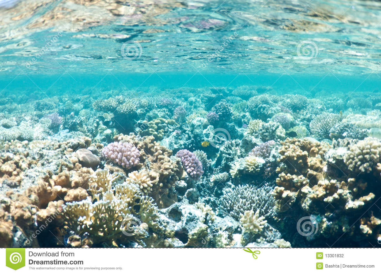 nature coral underwater landscape - photo #28