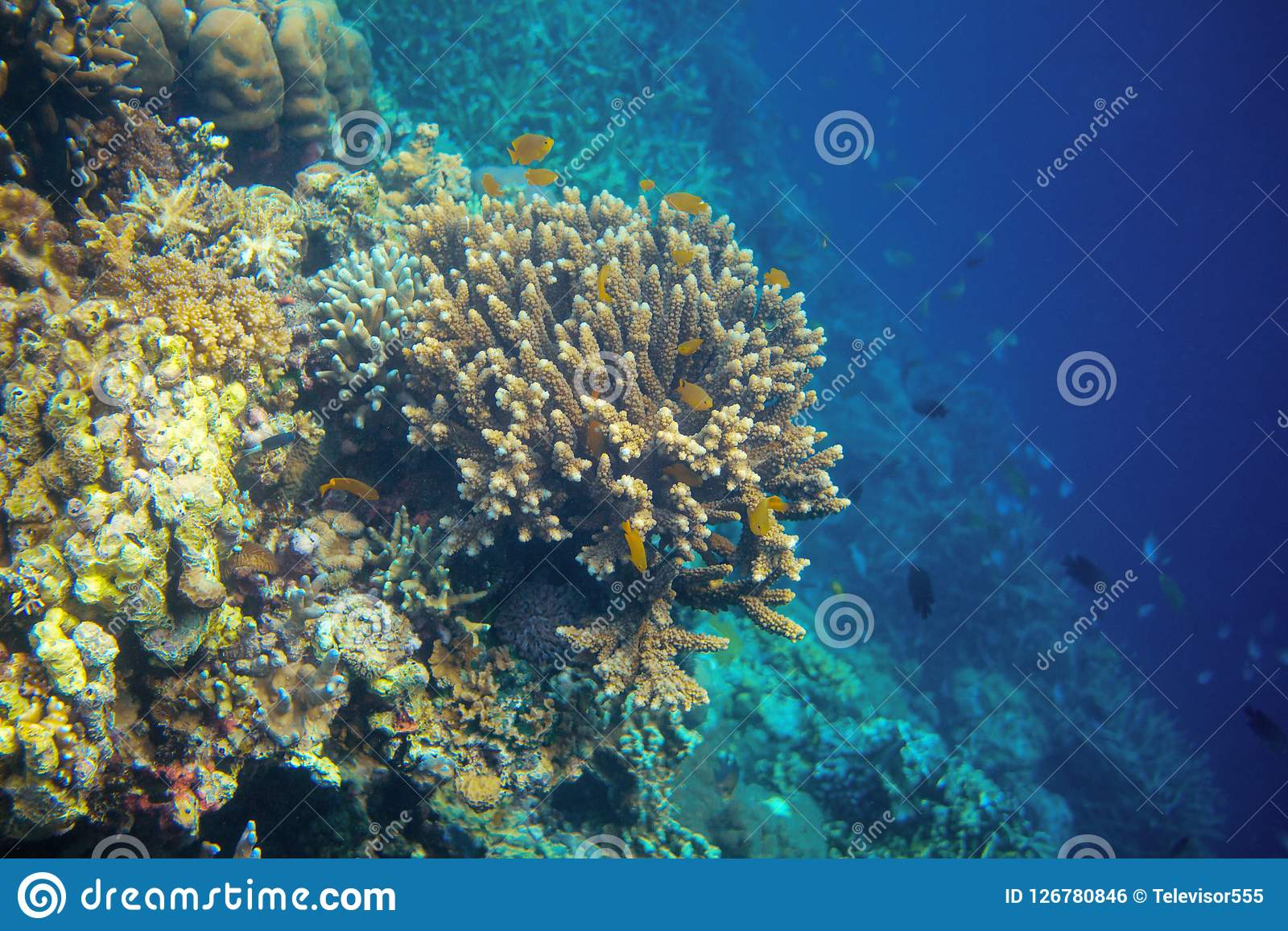 Underwater Landscape With Coral Fish Yellow Tropical Fish In