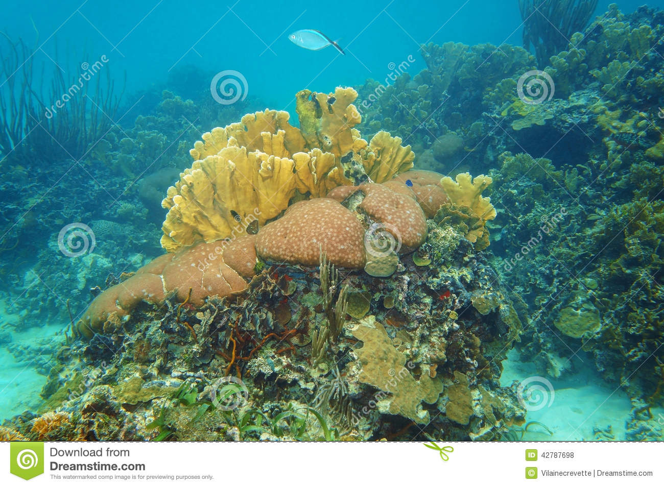 nature coral underwater landscape - photo #33
