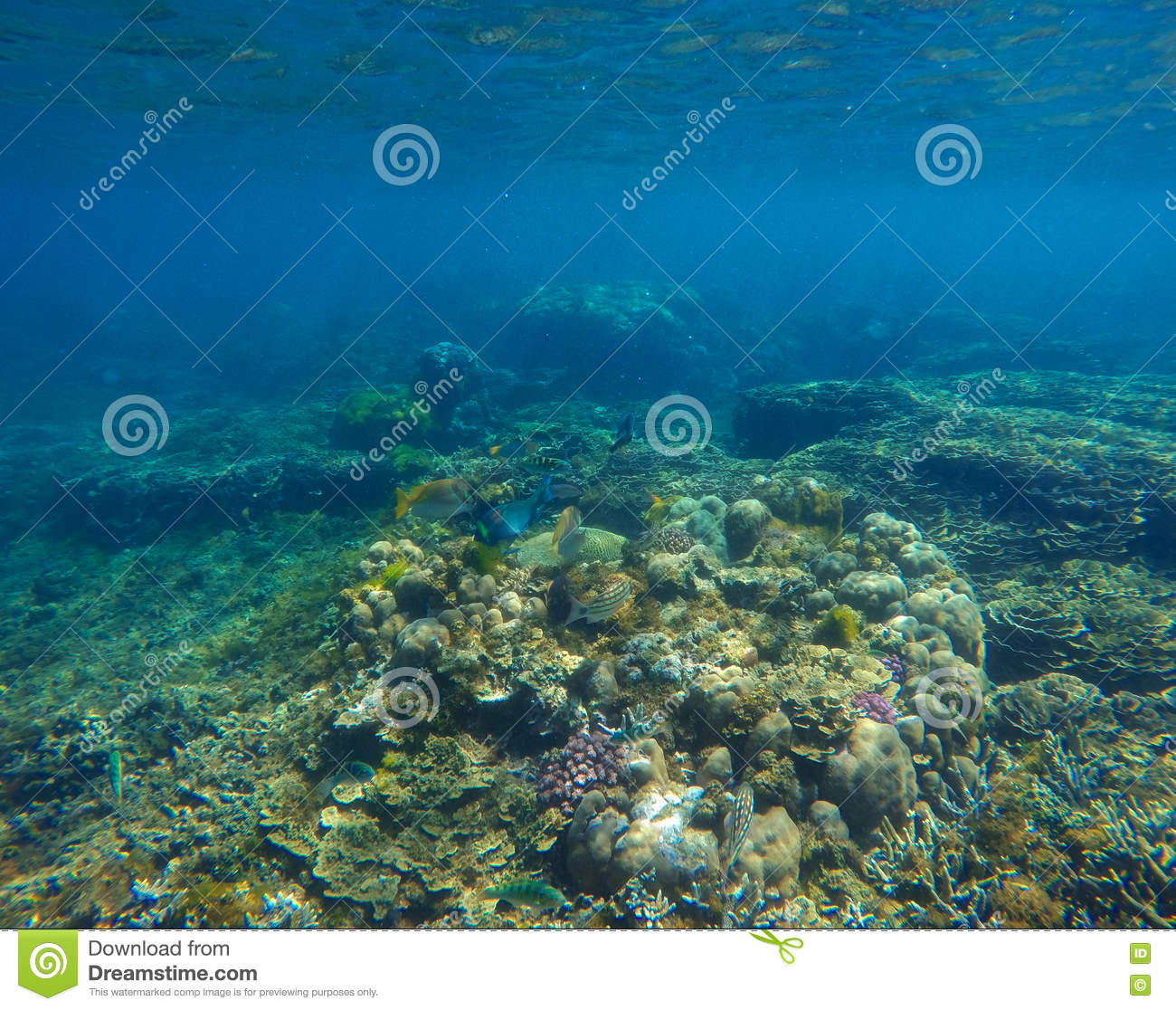 nature coral underwater landscape - photo #22