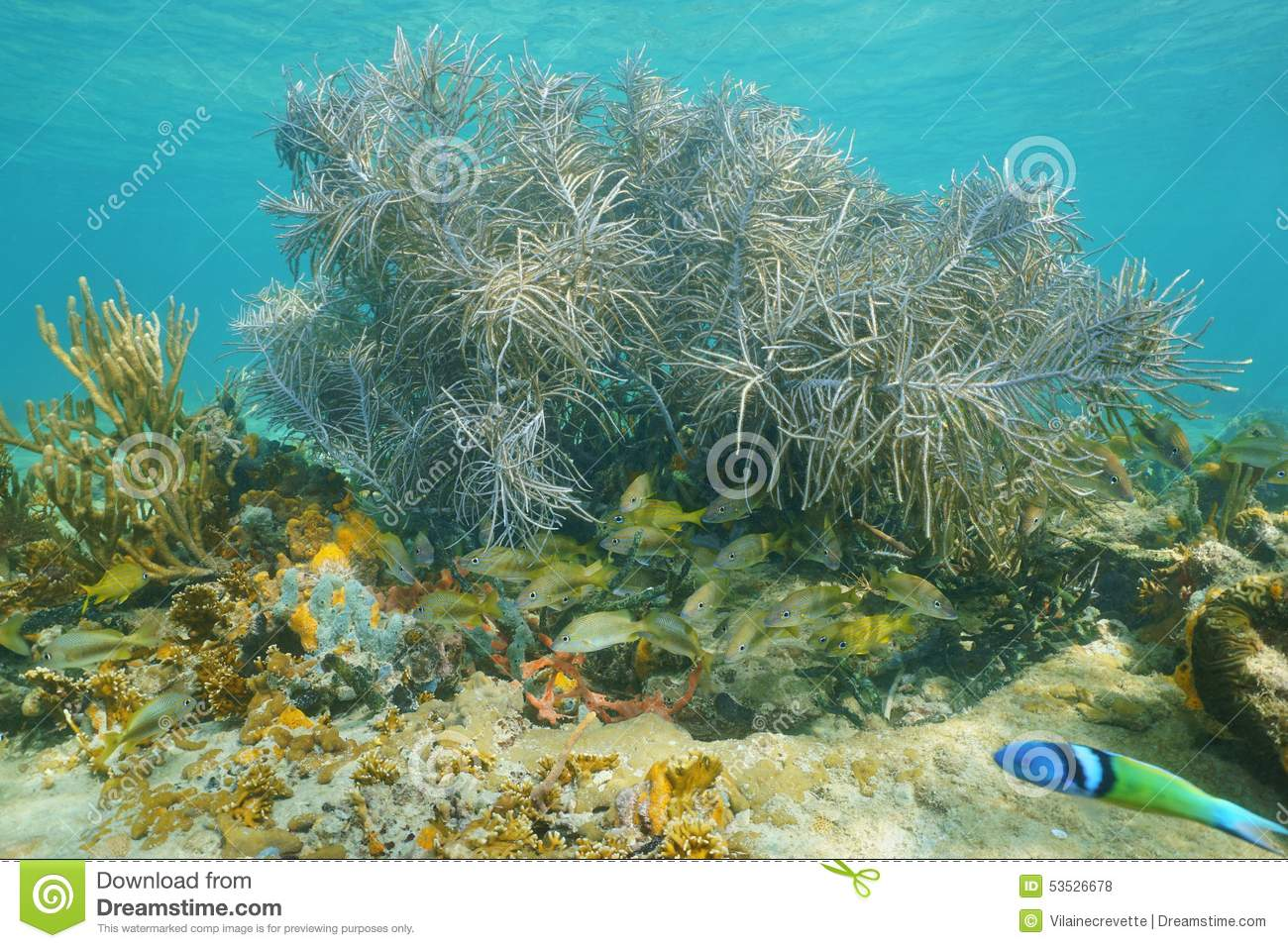 Underwater life sea plume soft coral with fish stock photo for Caribbean reef fish