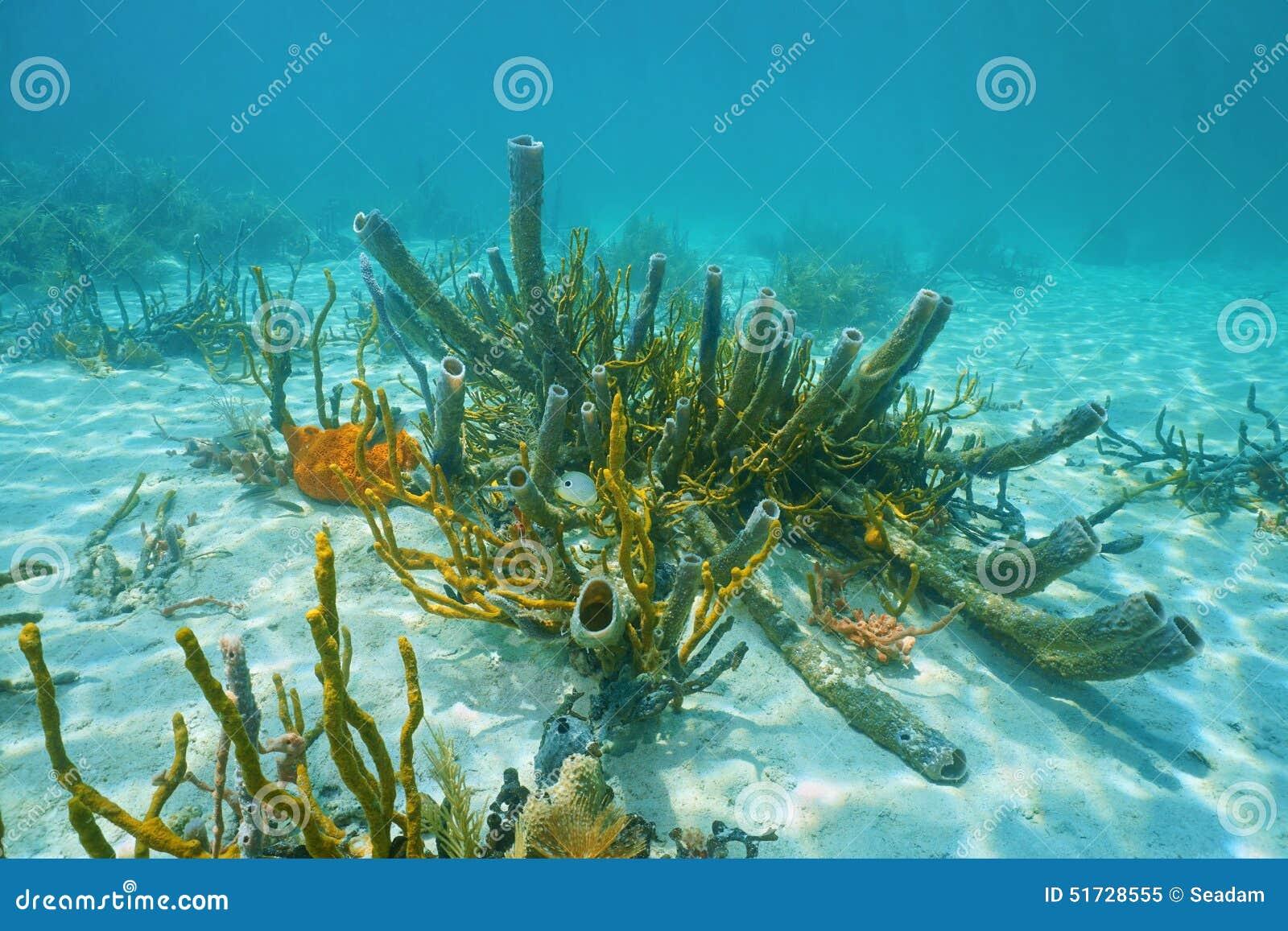 Underwater marine life branching vase sponge