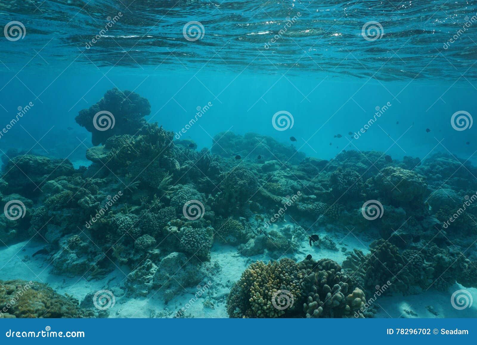 underwater ocean coral reef shallow ocean floor stock photo