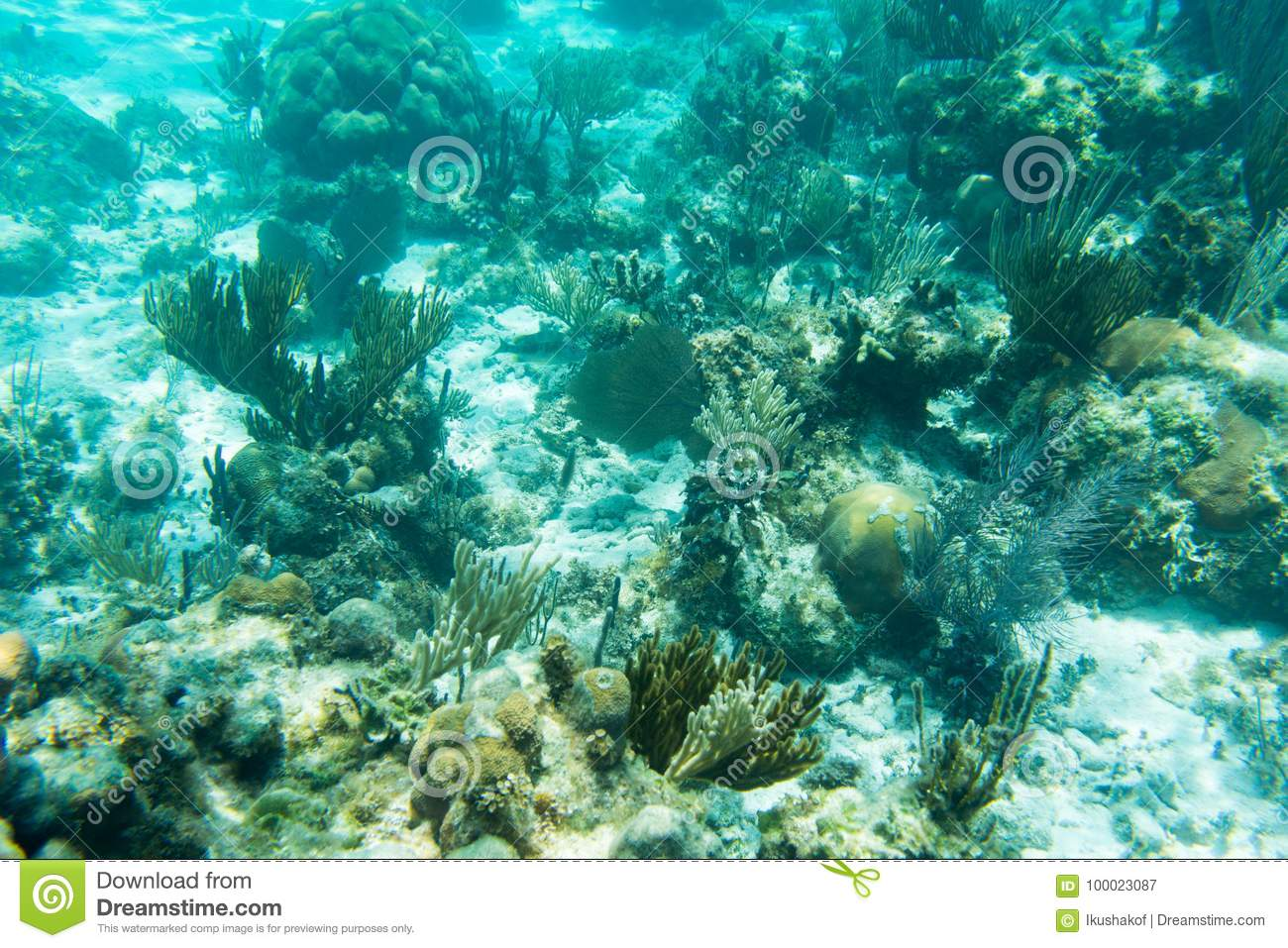 Underwater Photography Of The Caribbean Sea. Corals And Fish Stock ...