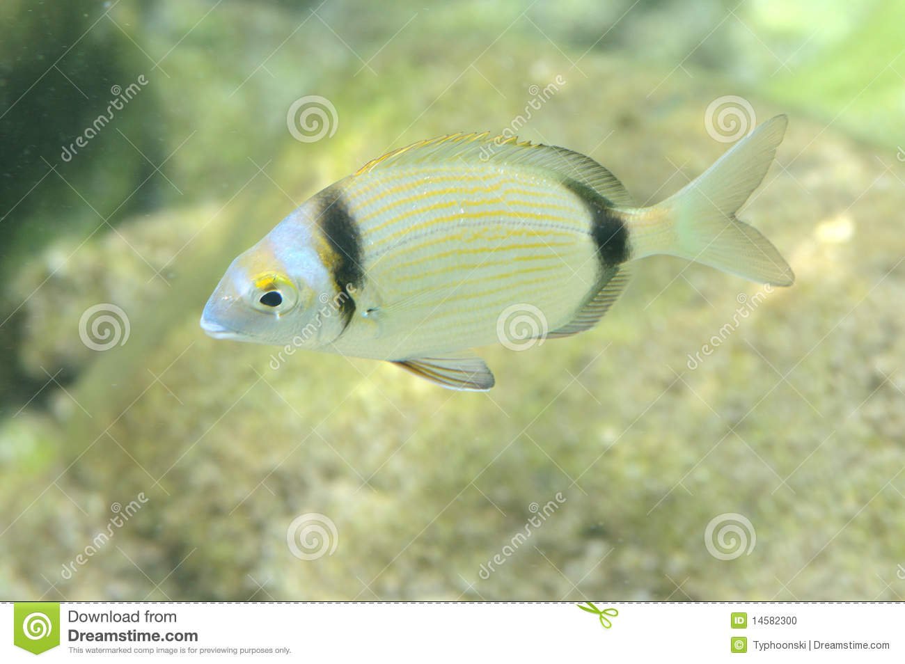 Underwater picture of a fish