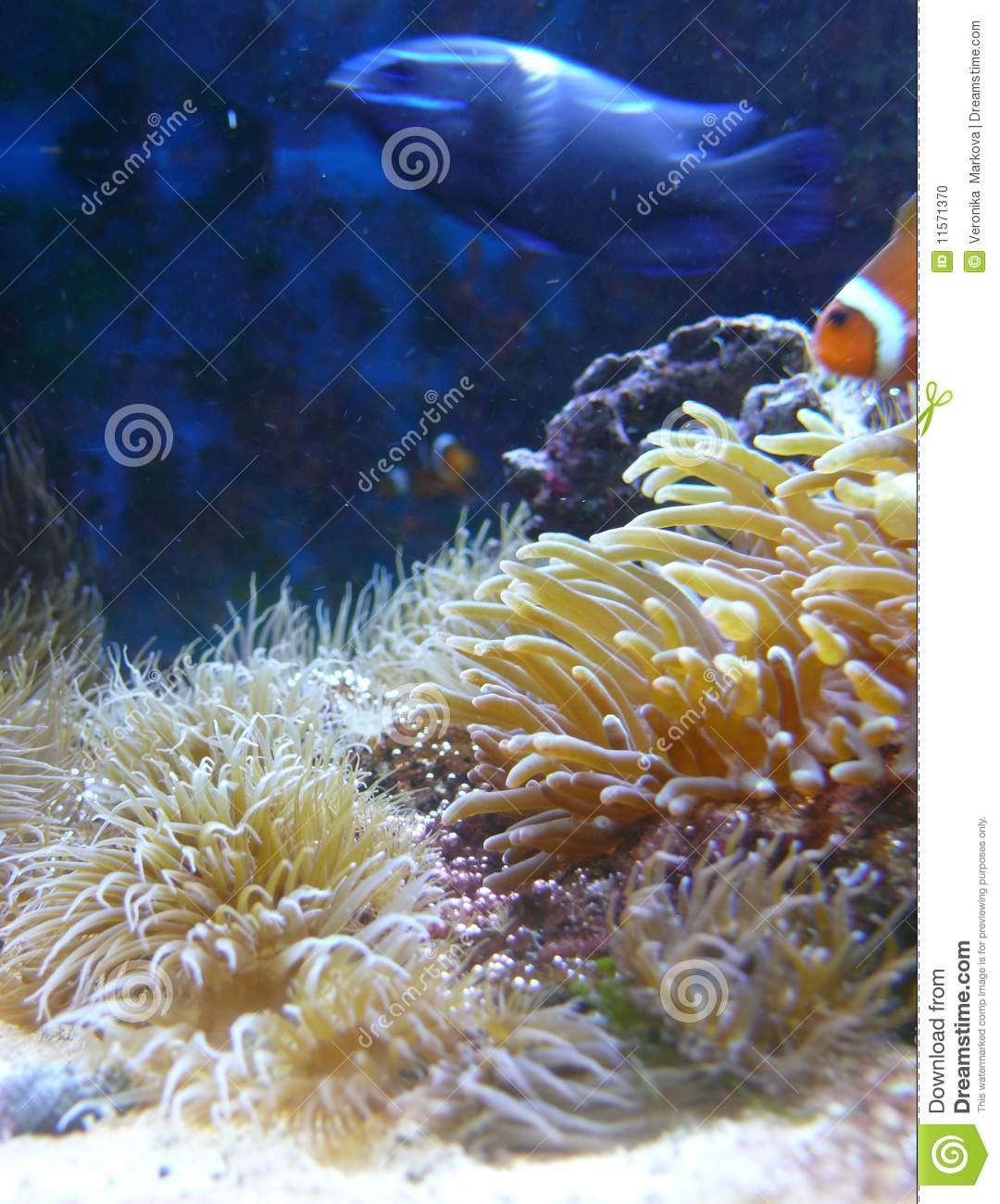 Underwater plants with fish on background