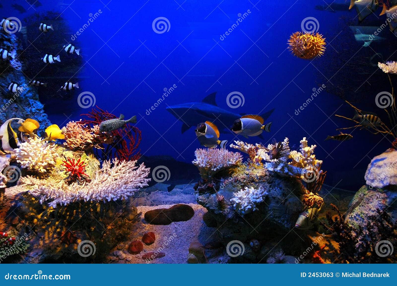 Underwater back... Underwater Fish Scene