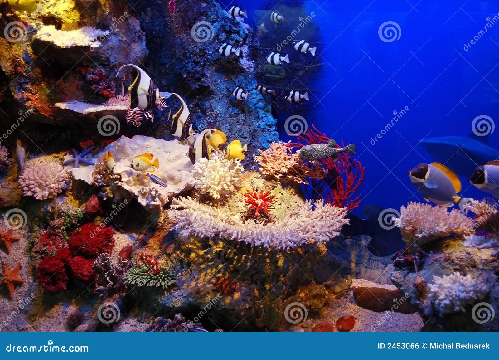underwater scene stock photo. image of underwater, bubbles - 2453066