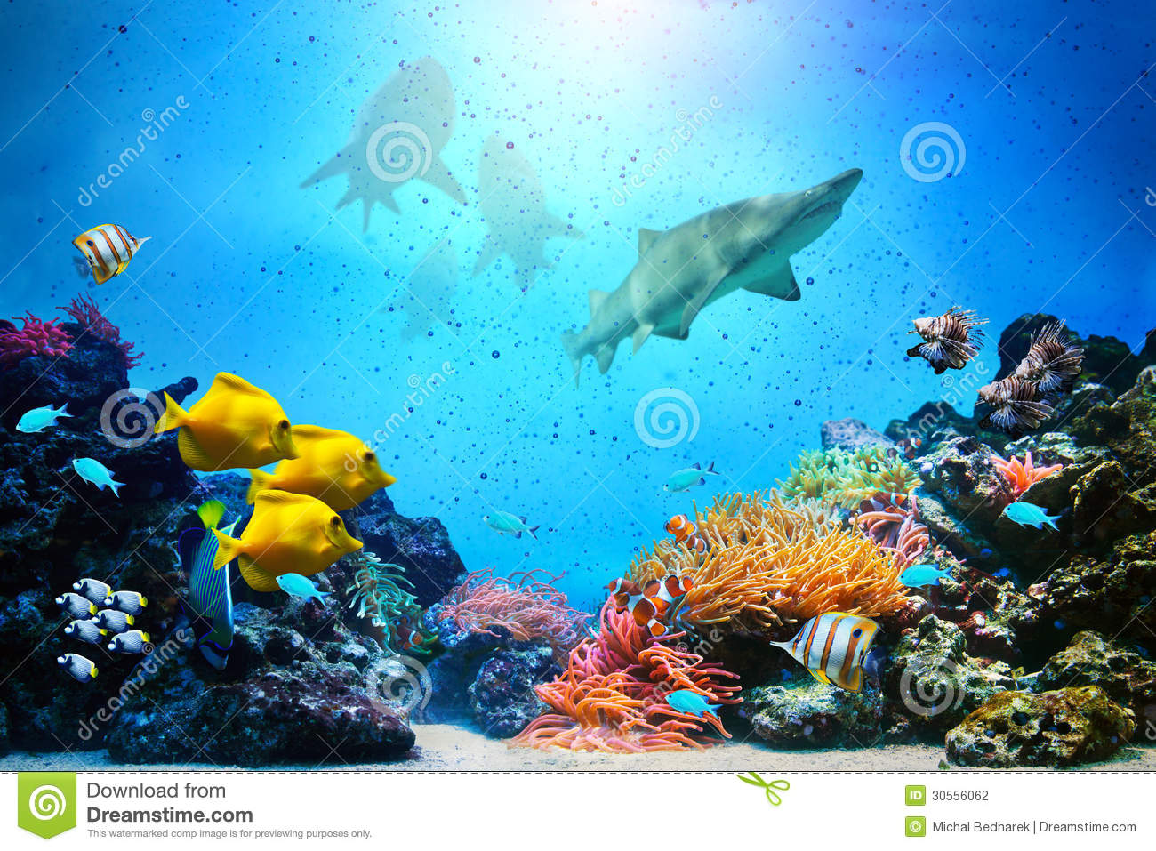 Underwater Scene Coral Reef Fish Groups Stock