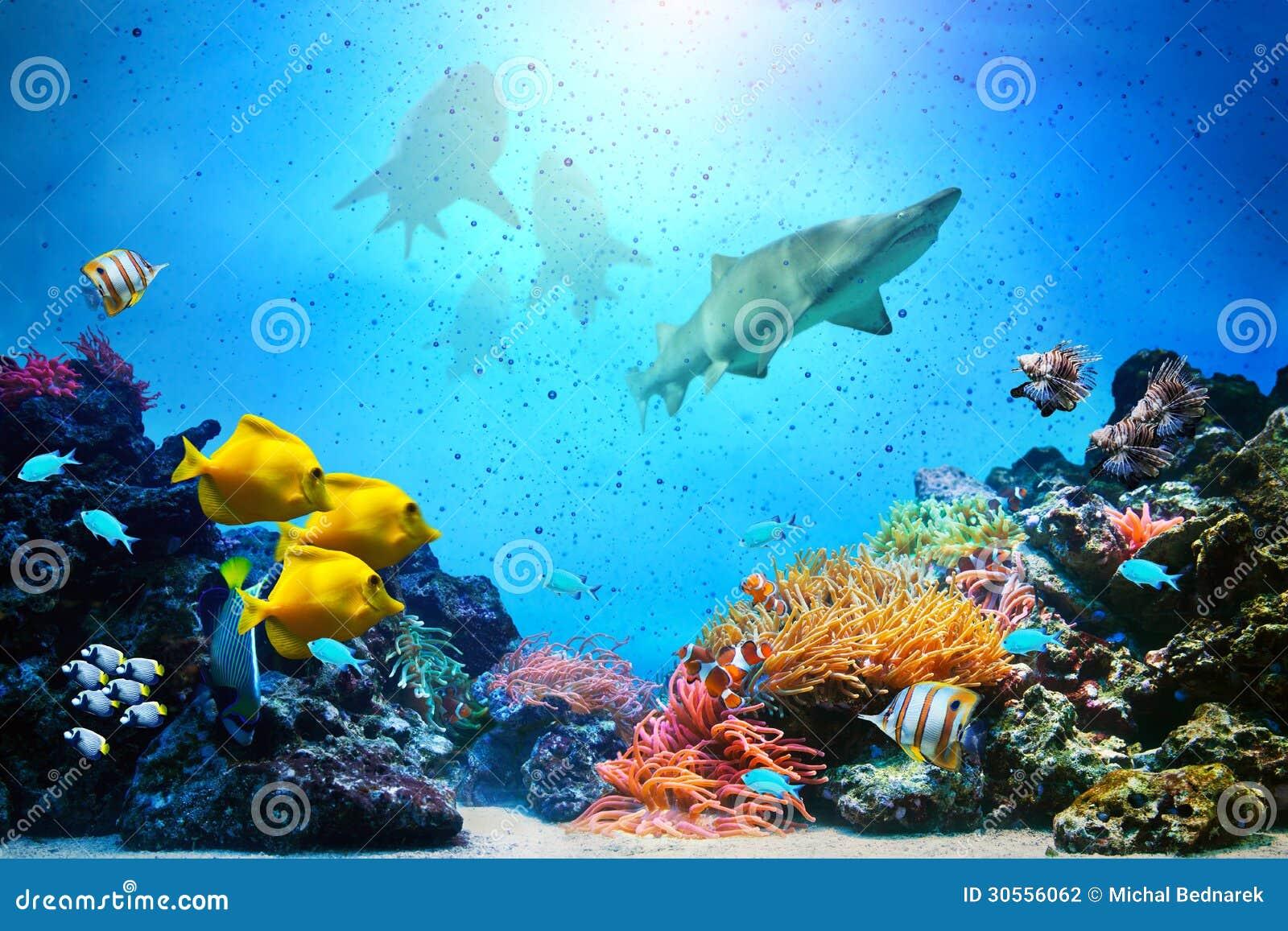 Underwater scene. Coral reef, fish groups