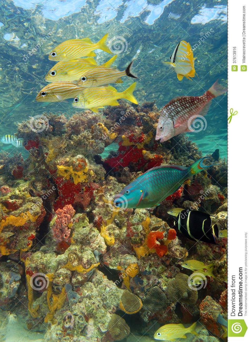 Sea Turtle Underwater With Colorful Tropical Marine Life ... |Colorful Underwater Life