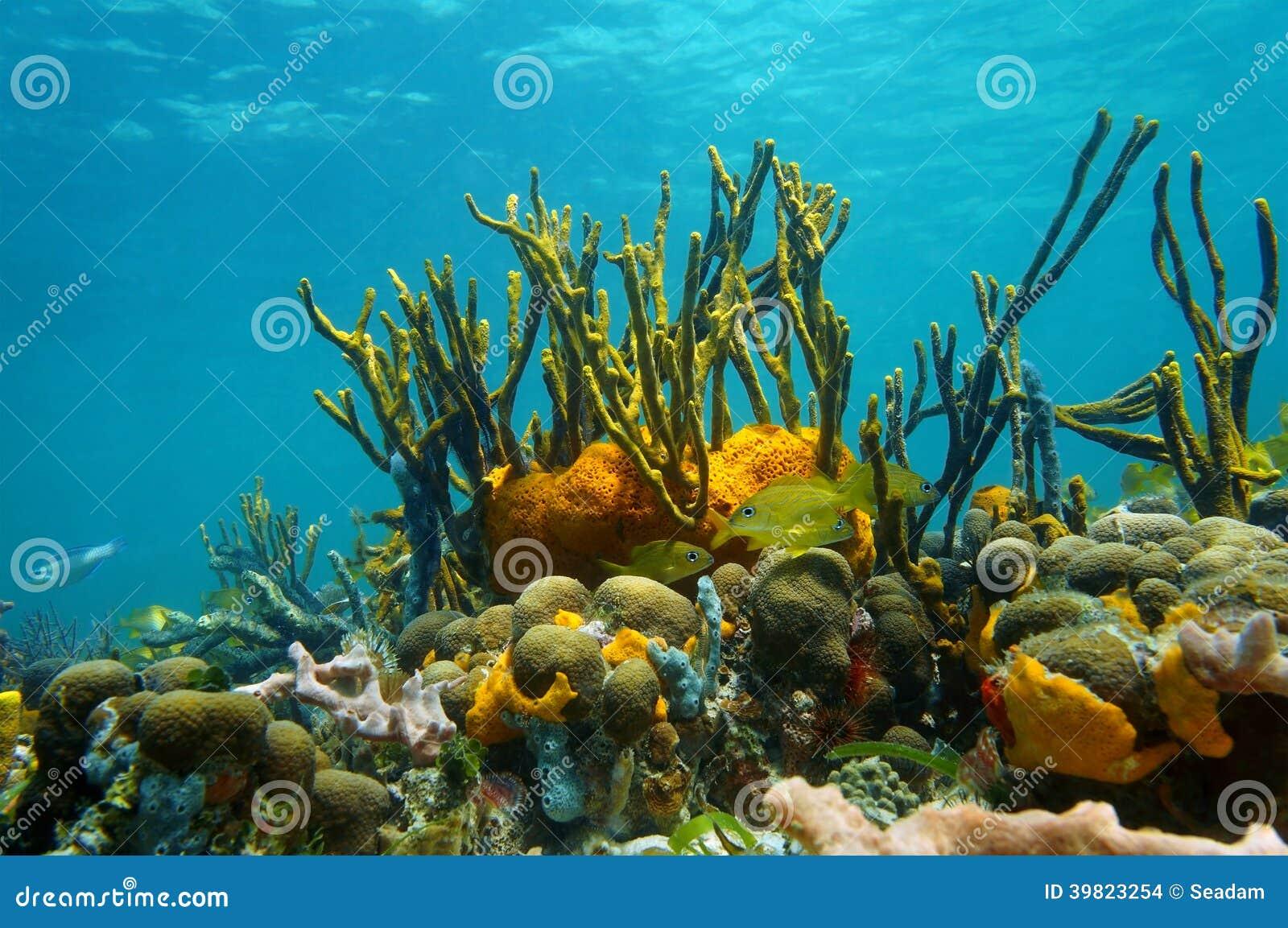 Colorful Underwater Marine Life With Starfish And Tropical ... |Colorful Underwater Life