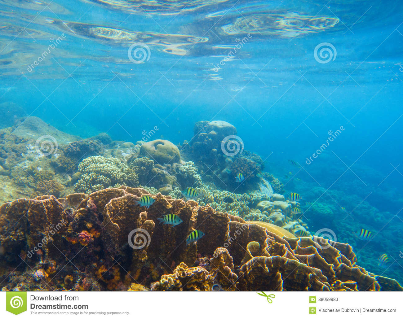 Underwater scenery with coral reef and tropical fishes. Blue sea view with marine fauna.