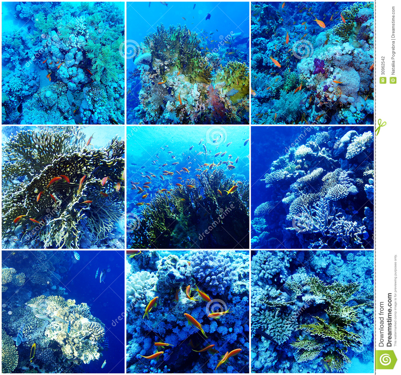 sea animals collage stock photos images u0026 pictures 66 images
