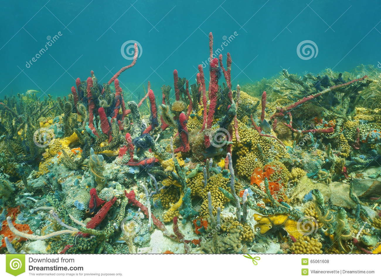 Colorful Underwater Marine Life In A Coral Reef With Water ... |Colorful Underwater Life